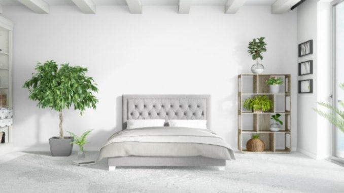 Como refrescar ambiente com plantas   ZAP em Casa