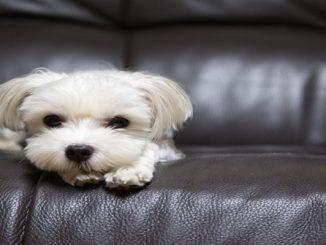 Não deixe a criançada ou os animais acabarem com os móveis