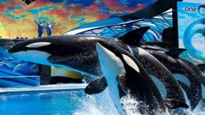 SeaWorld terá que pagar US$ 4 mi por ocultar prejuízos com documentário