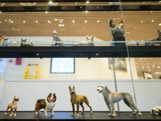 Nova York inaugura um novo museu dedicado aos cachorros