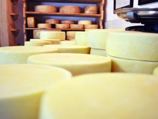 Proteínas, minerais e vitaminas: queijo traz benefícios para saúde, mas exige cuidados