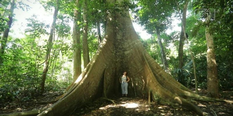 5 coisas para conhecer na região de Alter do Chão e Santarém além da Amazônia