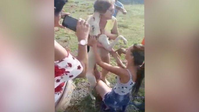 Cão fica cheio de beijinhos após ser retirado de montanha e ter reencontro emocionante com os donos; vídeo