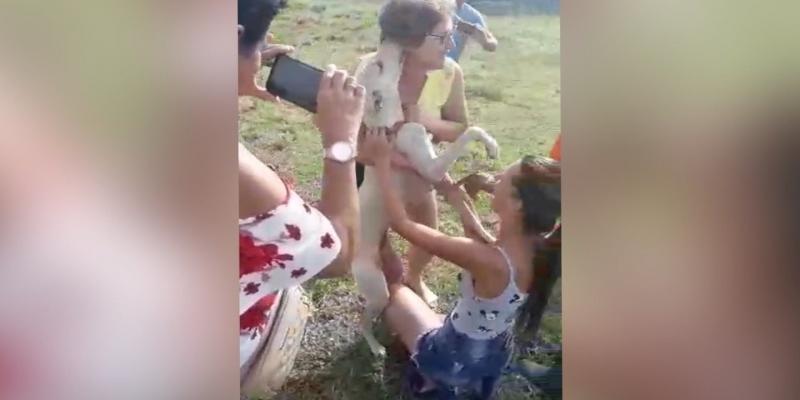 Família comemora após cãozinho Titã ser resgatado de uma montanha em Conceição de Macabu