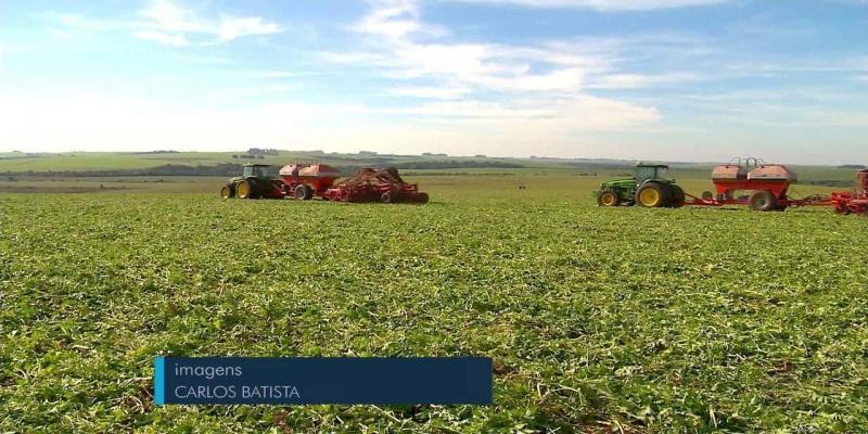 Produtor de soja do noroeste do RS tem maior produtividade média do Brasil