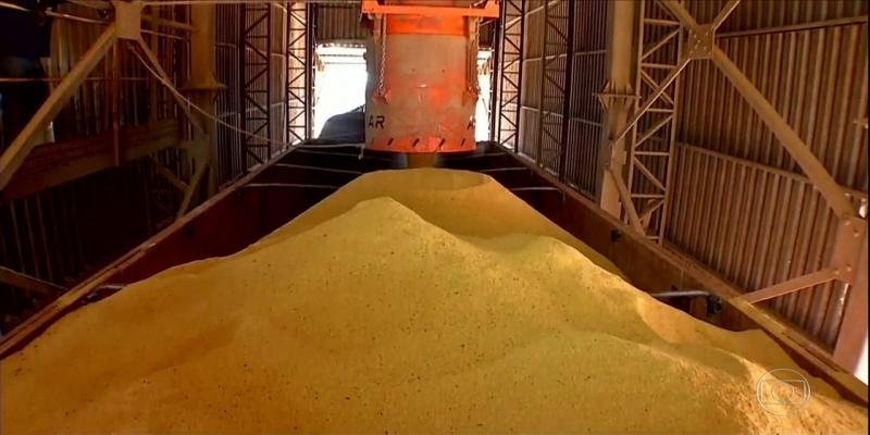 Produtores de MT fornecem milho para a produção de etanol