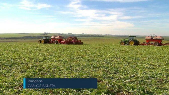 Propriedade de Cruz Alta ganha título de maior produtividade de soja do Brasil